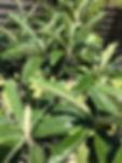 山梨県甲府市の小瀬スポーツ公園の近くで、指圧、マッサージ、鍼灸、温灸、びわの葉灸を行っている指圧鍼灸院Forestフォレストです。