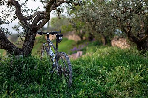 bike olive grove Riccardo Chiarini.jpg