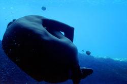 Instal.lació Subaquàtica Menorca