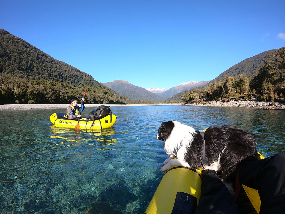 Border Collie Dog Pack-rafting On New Zealand West Coast River