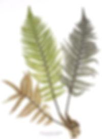 220px-Nature_print,_Alois_Auer.jpg.jpg