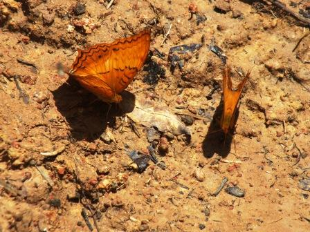 insects also need minerals