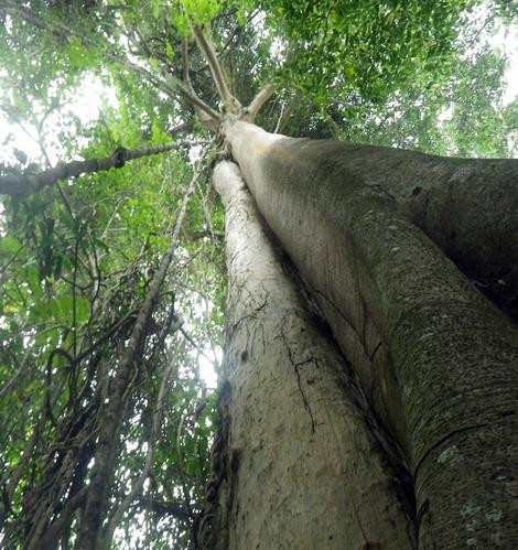 forest tree.jpg