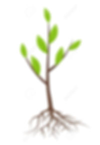 66076165-tree-with-roots-and-leaves-isol