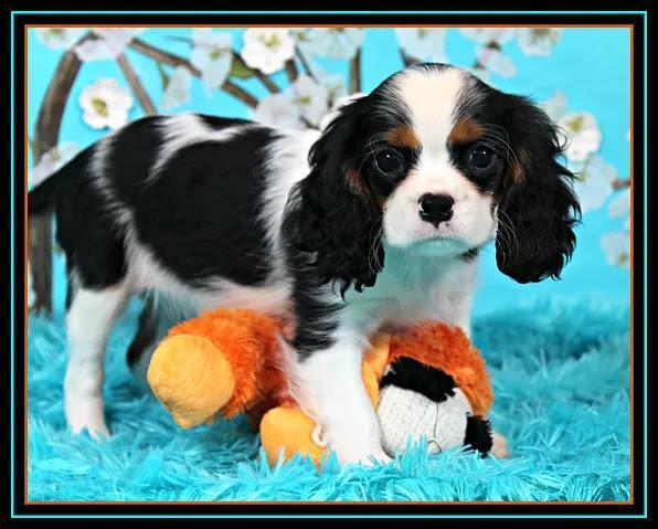 Emile's Puppy Picture