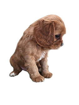 Ginger%20as%20a%20Puppy_edited.png