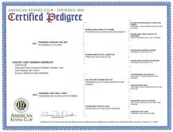Ginger's AKC Certified Pedigree