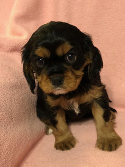 Jewels' Puppy Picture
