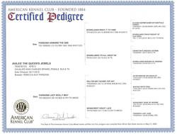 Jewels- AKC Certified Pedigree.jpg