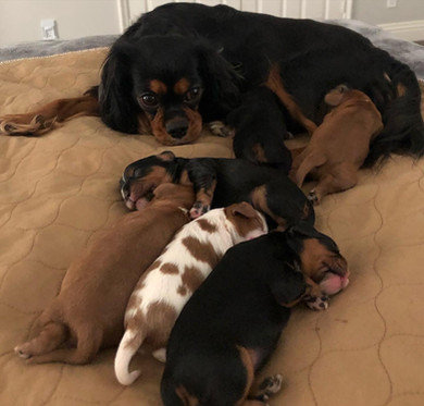 Jewels and her First Litter