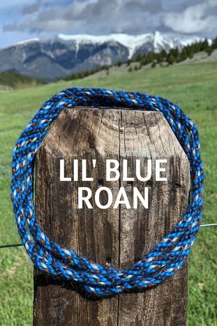 LIL' BLUE ROAN.jpg