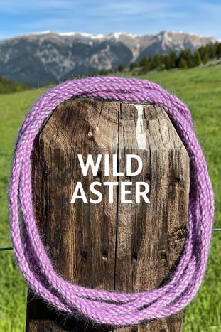 WILD ASTER.jpg