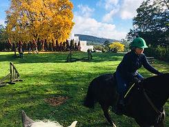Joldwynds horse training field