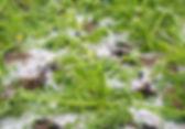 damaged gourd after hailstorm.jpg