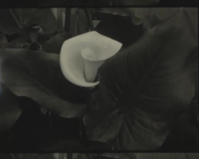 Filme Super 8 preto e branco, pintado à mão