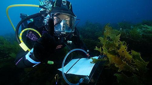Last dive2.jpg