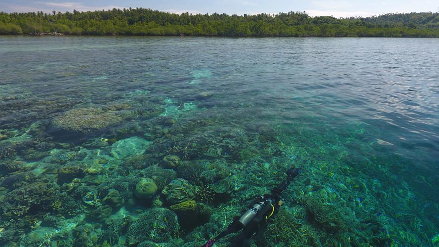 Expeditions_Manado_06_TheOceanAgency.JPG