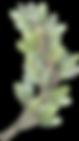 kisspng-wreath-watercolor-painting-flowe