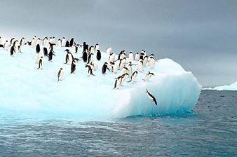 penguen.jpg