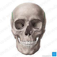 kafatası.jpg