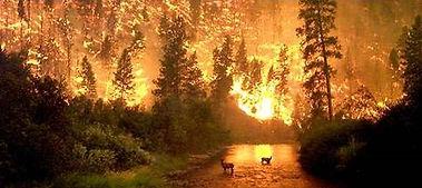 ormannfire.jpg