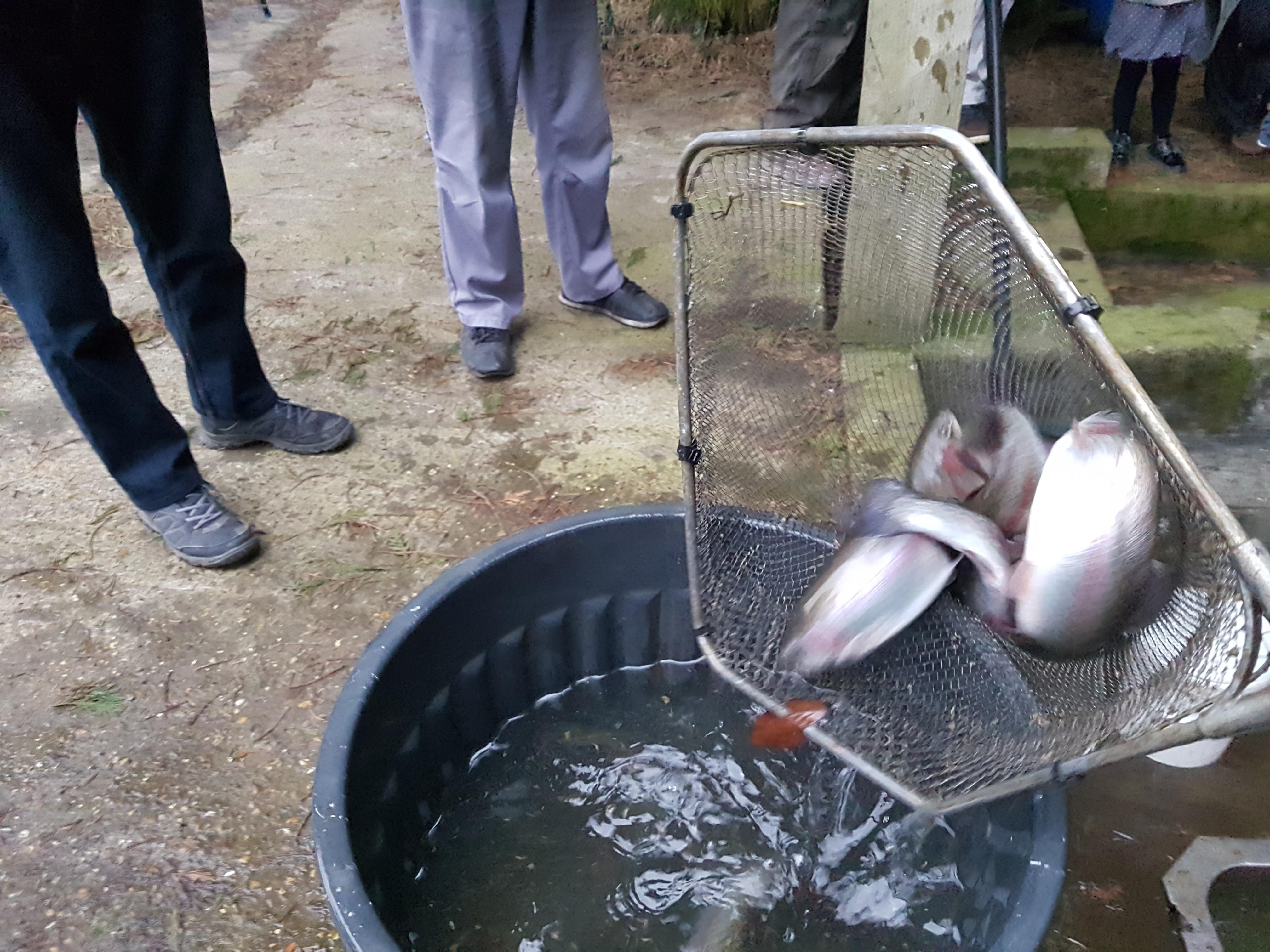 Truite saumoné de 400gr à 5kg pour l