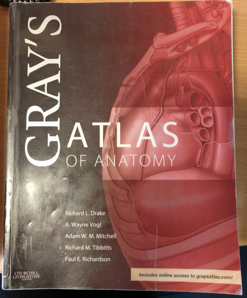 Grays Atlas Of Anatomy 1st Edition Grays Anatomy