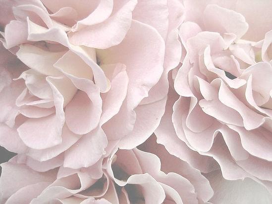 Pink%20Petal%20Profusion%20Art%20Print%2