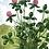 Thumbnail: Wildflowers