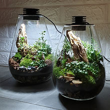 terrarium with built in led lights