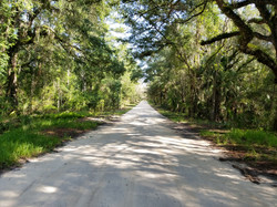 Withlacoochee Bay Trail