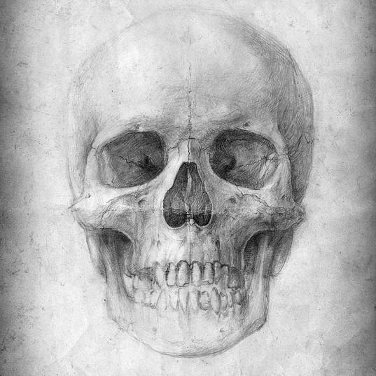 metopic suture - skull study