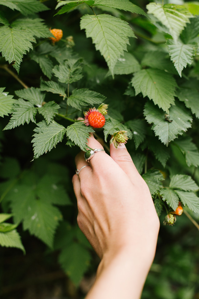 As we walked along the path, we paused on many occasions to admire all the different species of plants. Salmon berries are in season and added colour to much of the trail.