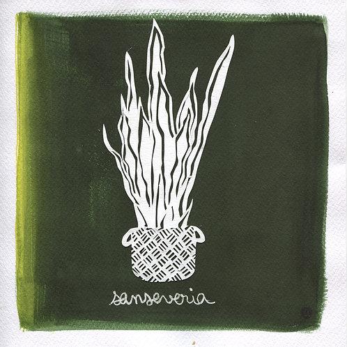 We will plant you - Original 02 - Sanseveria