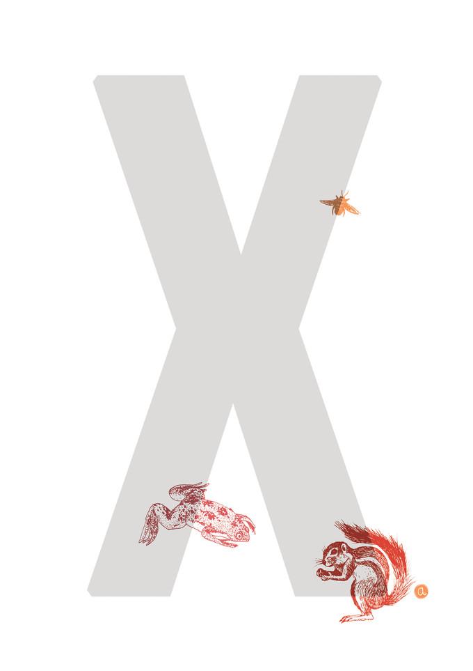 1903_Alphabetes_X.jpg