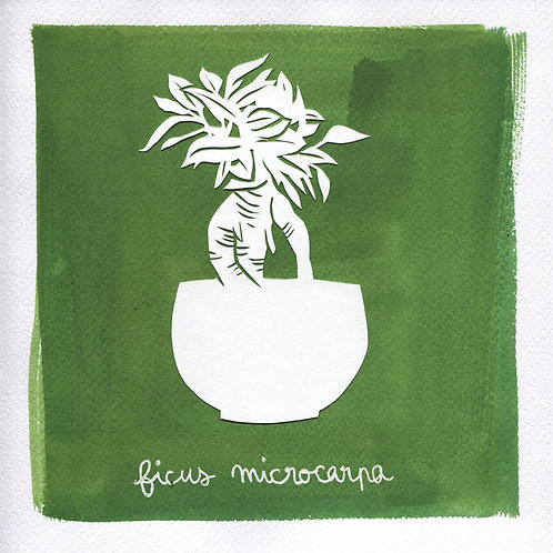 We will plant you - Original 16 - Ficus microcarpa