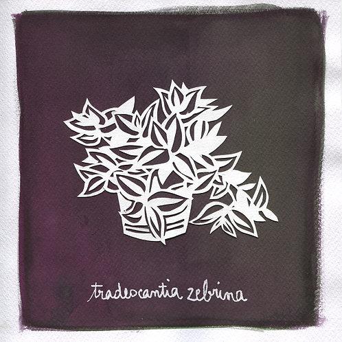 We will plant you - Original 03 - Tradescantia zebrina