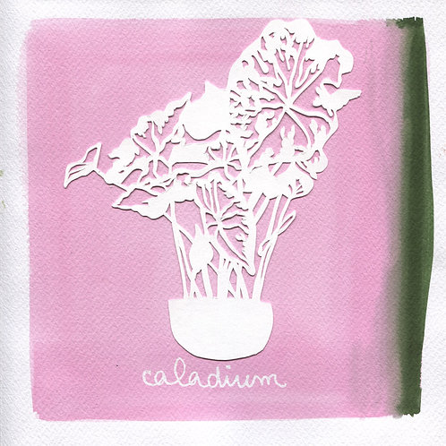 We will plant you - Original 28 - Caladium
