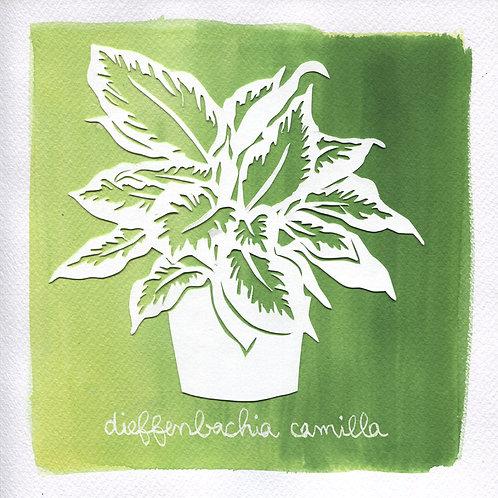 We will plant you - Original 29 - Dieffenbachia camilla