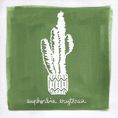 We will plant you - Original 10 - Euphorbia erythrea