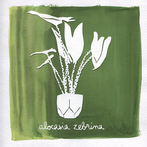 We will plant you - Original 23 - Alocasia zebrina