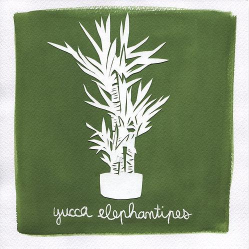 We will plant you - Original 24 - Yucca elephantipes