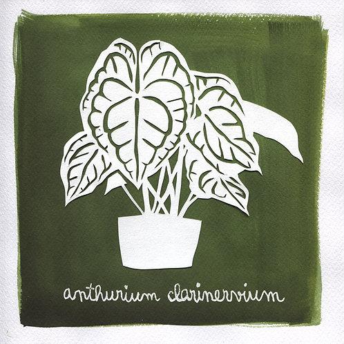 We will plant you - Original 04 - Anthurium clarinervium