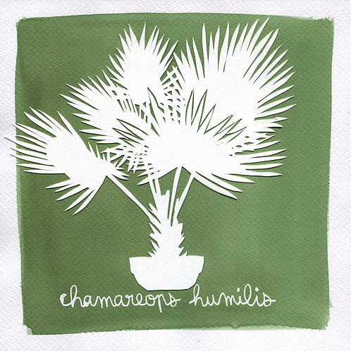 We will plant you - Original 30 - Chamareops humilis