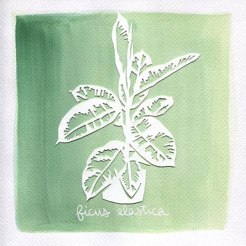 We will plant you - Original 09 - Ficus elastica