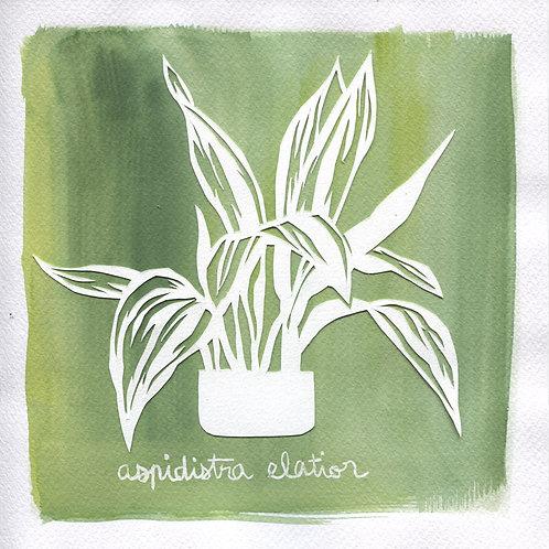 We will plant you - Original 06 - Aspidistra elatior