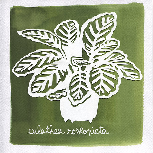 We will plant you - Original 25 - Calathea roseopicta