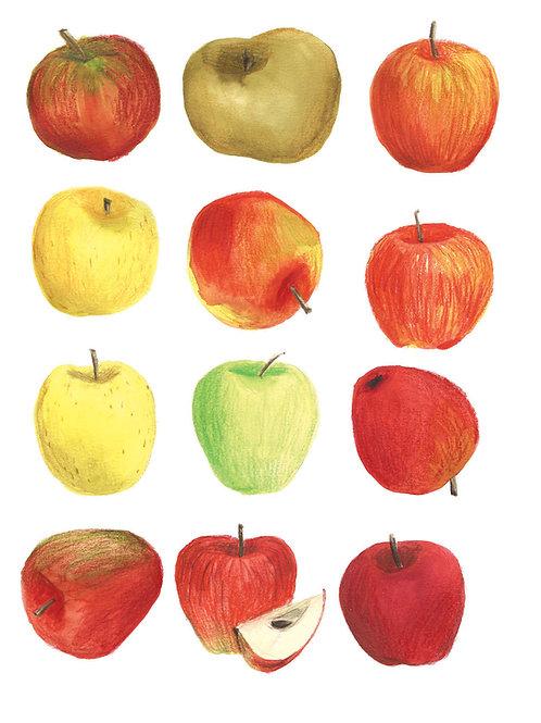 Fruits et légumes - Original 15