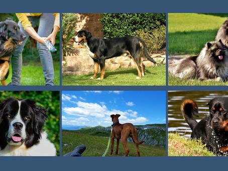 Hofhund: Beruf und Berufung
