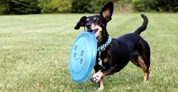 dachshund-2035700_1920_edited.jpg
